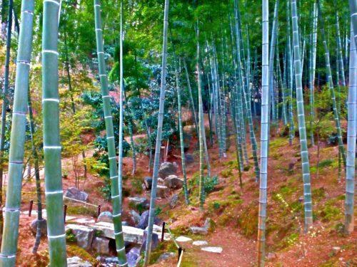 Bambuslundene i Arashiyama