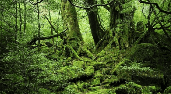 Naturområder