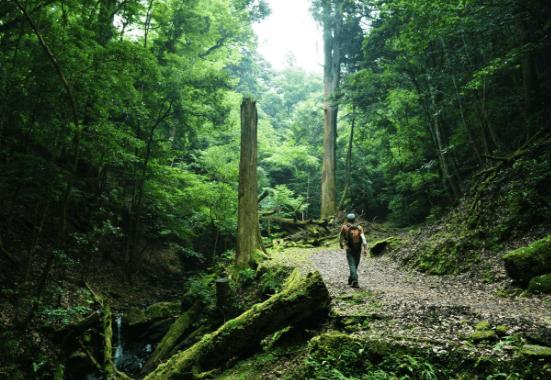 Kasugayama-urskoven