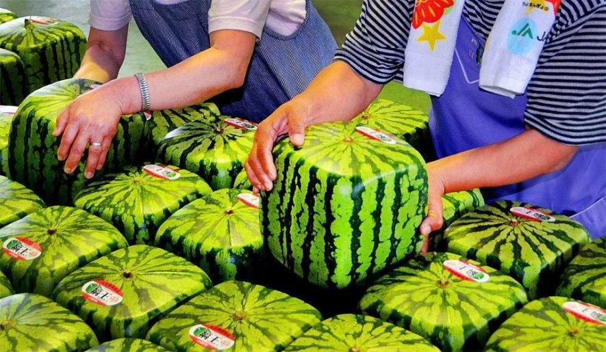 Firkantede vandmeloner