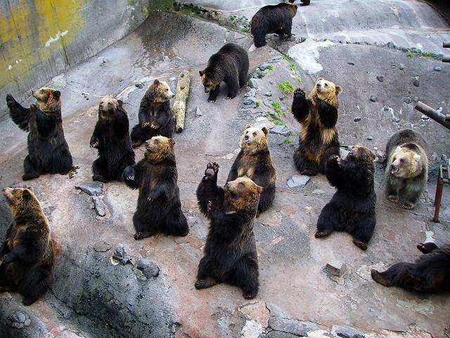 Noboribetsu bjørnepark