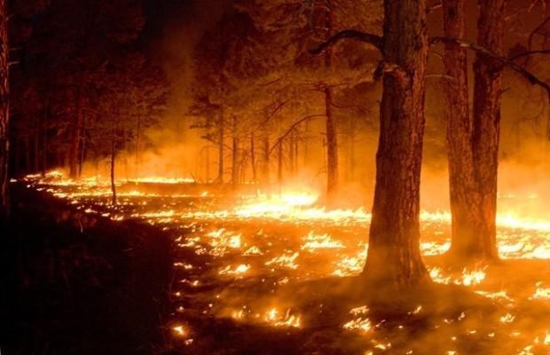 Kure-skovbranden i 1971