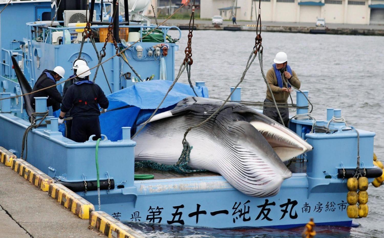 Hvalfangst i Japan