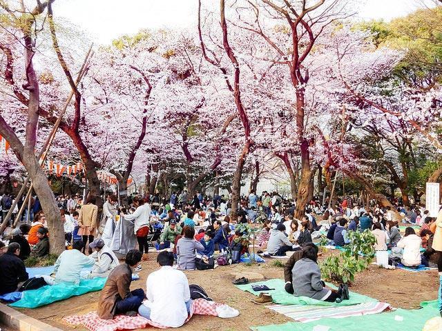 Hvornår skal man rejse til Japan?