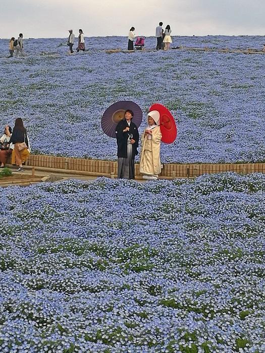 Brudepar i Hitachi Seaside Park (2019)