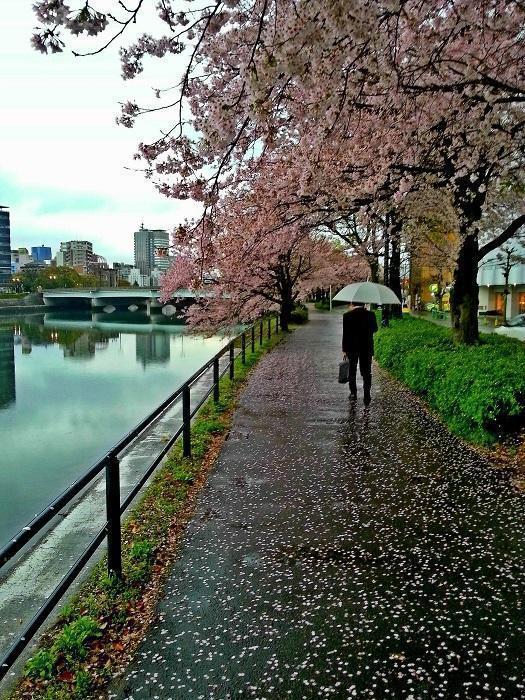 Kirsebærtræer i Hiroshima (2017)