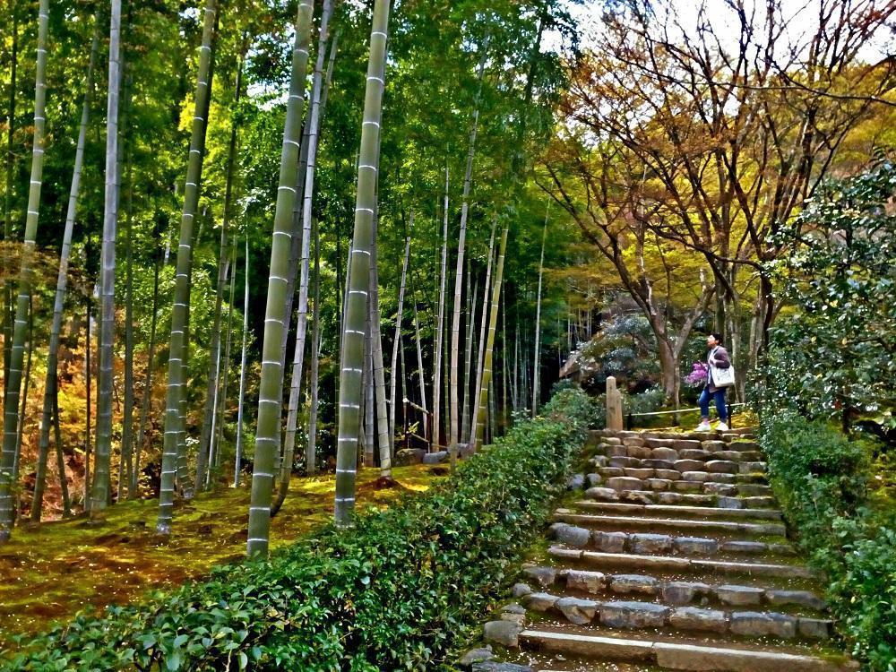 Bambusrør ved Jojakkoji-templet i Kyoto (2017)