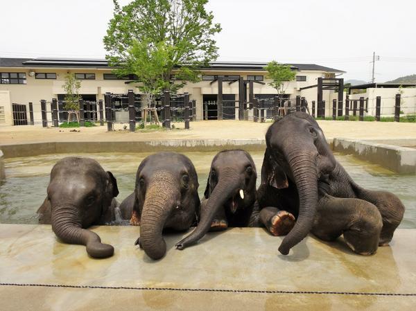 Kyoto Zoo