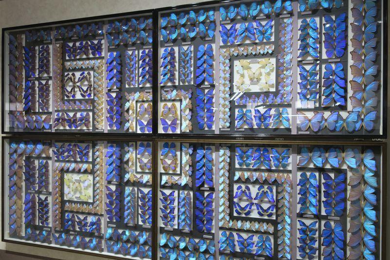 Nawa Insektmuseum