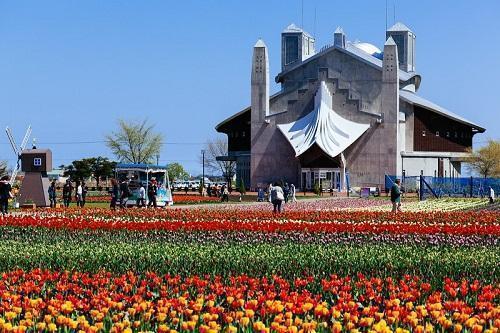 Kamiyubetsu Tulipanpark