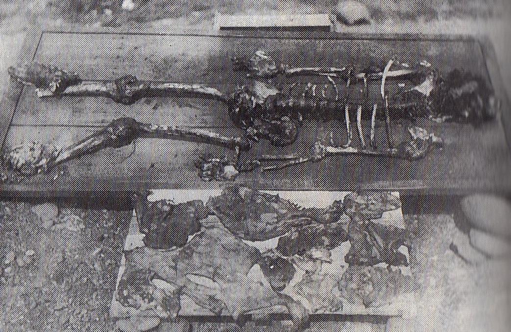 Hikarigoke-hændelsen
