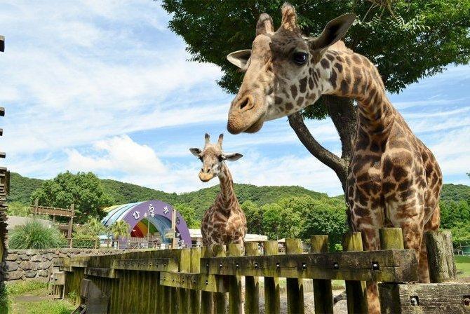 Hirakawa Zoo